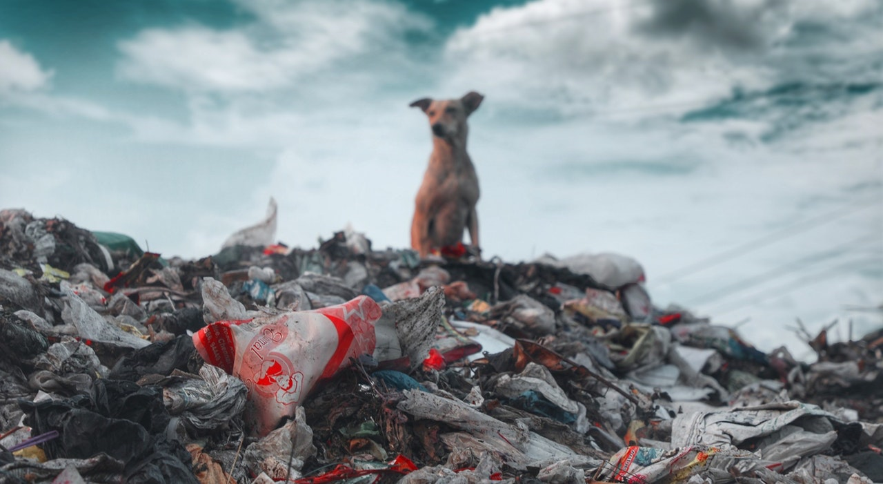 Australian Waste Facts & Statistics 019